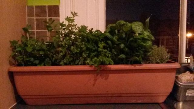 My new herb garden!