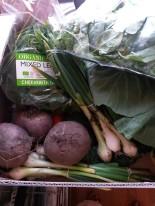 Kent Veg Box summer veg box
